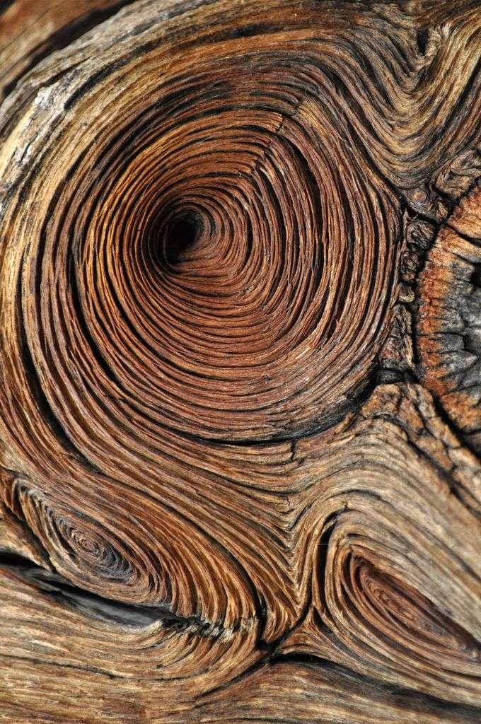 Dibujos naturales de la madera/LongDays/Longboard