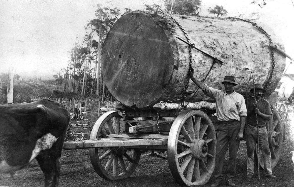 Recolección de madera/LongDays/Longboard