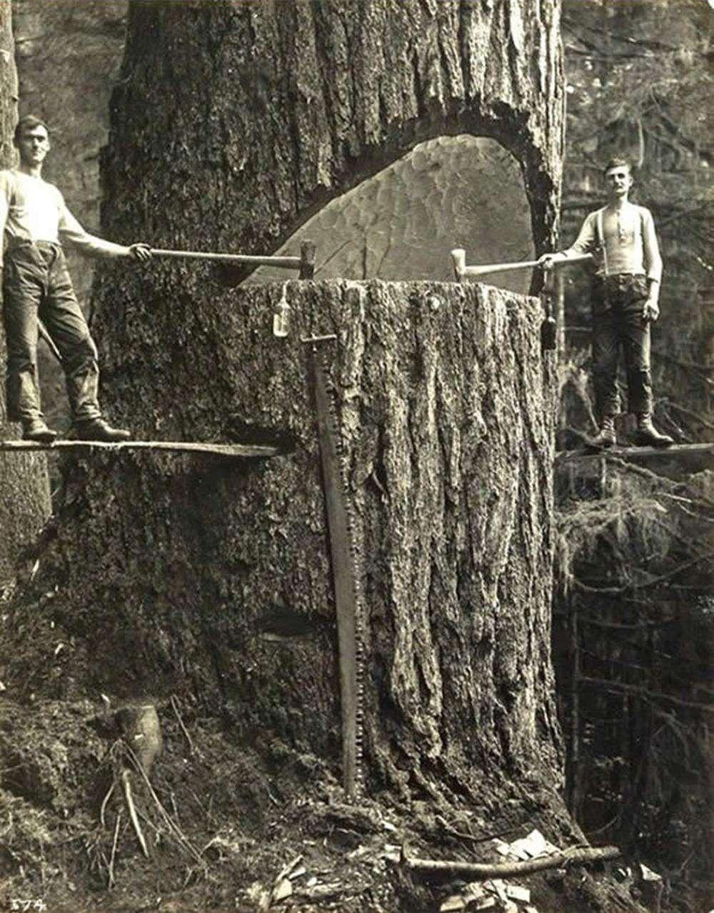 Recolección de madera/LonDays/Longboard